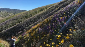 An array of wildflowers dot the hills